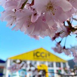 Photo de iCCi